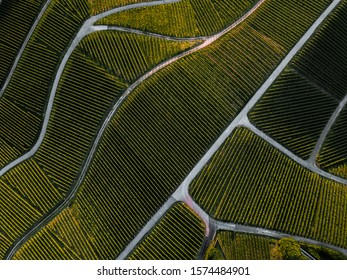 Vista aérea desde arriba de un verde viñedo de verano al atardecer en Rammersweier, Offenburg, Alemania