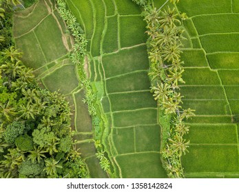 Top down aerial view of rice fields near Ubud in Bali, Indonesia