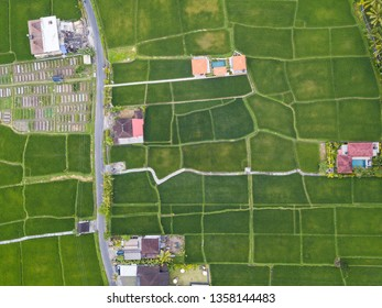 Top down aerial view of rice fields, houses and a road near Ubud in Bali, Indonesia