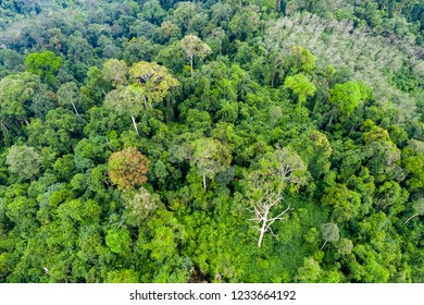 Top down aerial view of the tree canopy of dense primary tropical rainforest