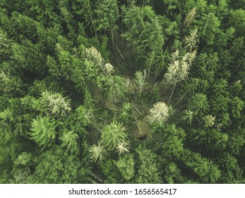 Top down ariel view on beautiful green forest in germany on a cloudy day.
