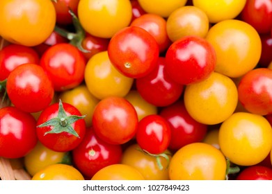 Top down close up view of ripe red and yellow cherry tomatoes