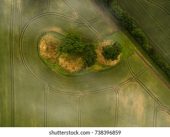 Top down drone image of a small patch of trees on a field