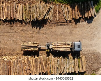 TOP DOWN: Flying above a loaded grey truck parked by large stacks of pine logs. Cargo lorry carrying logs and towing a trailer is left standing next to other logs freshly chopped down in nearby forest