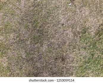 top down view of desolate dry grass