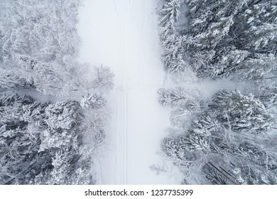 Top down view of the forest in winter. Winter landscape in the forest. Flying over ski track in winter forest. Top down view of ski road. Trees in the snow. Frosty forest. Nature