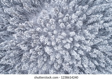 Top down view of the forest in winter. Winter landscape in the forest. Flying over winter fir forest. Top down view of high snowy trees. Trees in the snow. Frosty forest. Nature