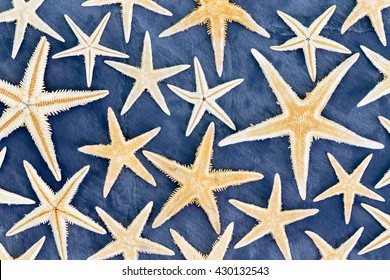 Top down view on full frame background pattern of dried starfish in various sizes over blue background for beach or ocean life theme