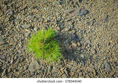 Top Down View of Small Green Coniferous Tree Growing on Dry Stony Ground in the Afternoon Light