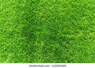 Top of grass, texture