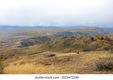 At the top of a high-mountain plateau overgrown with a sparse coniferous forest in the clouds. Altai, Siberia, Russia.