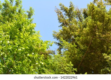 top of light green trees