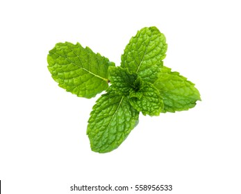 Top mint leaves, fresh raw isolated on white background.