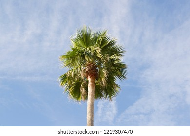 Top of a palm tree in front of a summery blue sky with small clouds