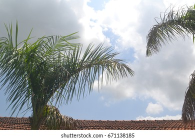 Top of Palm tree with Roof top and Sky