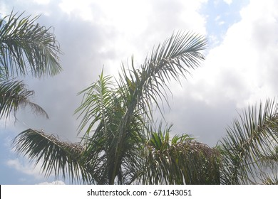 Top of Palm tree with Sky