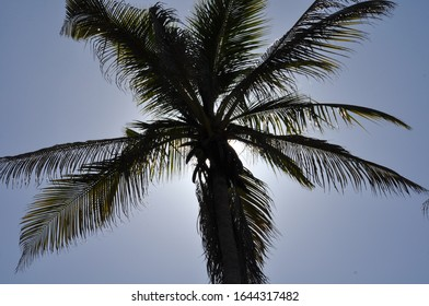 Top of Palm tree with sun backlight making silhouette