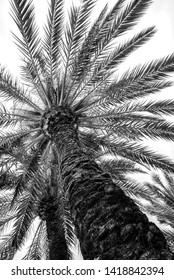 The top of the palmtree