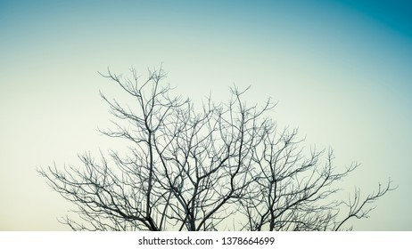 Top part of leafless treetop on clear sky as minimalism photo style