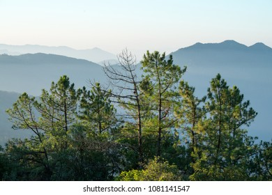 The top of the pine trees with the mountain as  backgrounds, Inthanon mou tain ranges, Chaingmai Thailand