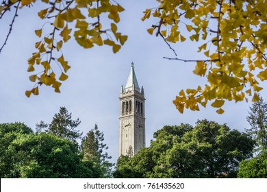 The top of Sather tower (The Campanile) rising above the trees and framed by ginkgo autumn colored leaves, on a blue sky background, UC Berkeley, San Francisco bay, California