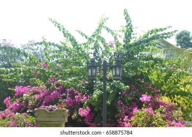 Top of Tree part with pink flowers