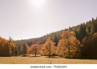 top of the trees in autumn forest at sunset