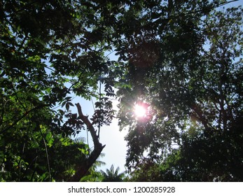Top of trees, seen from below, with sunshine