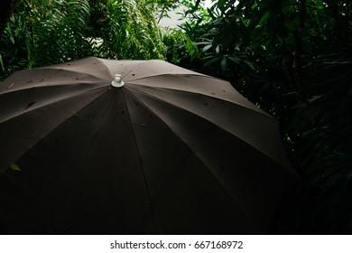 Top of umbrella in garden.