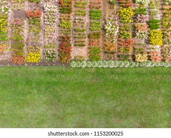 top view aerial photo of flower field in urban area. drone photography