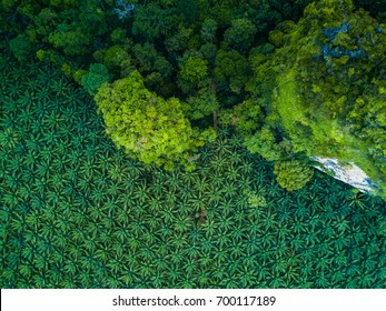 Top view aerial shot of the palm grove and shadows from palm-trees