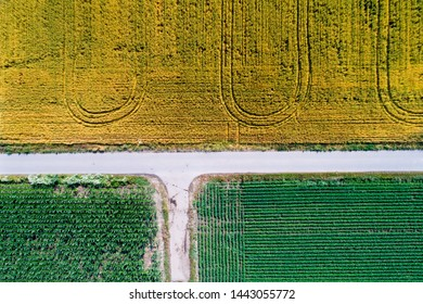 Top view of agricultural parcels with different crops in summer time shoot from drone
