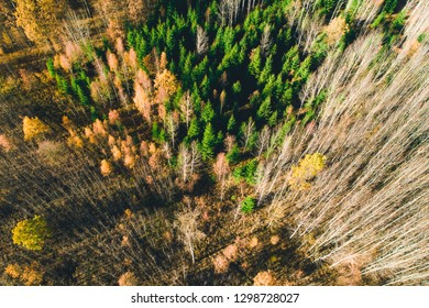 Top view of autumn forest trees
