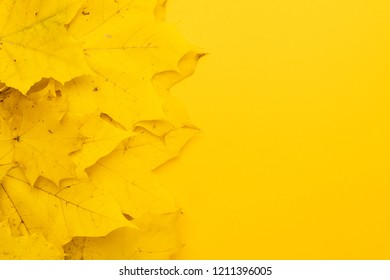 top view of autumn leaves on yellow background