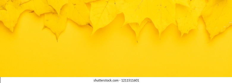 top view of autumn leaves on yellow background. bright yellow fallen leaves banner