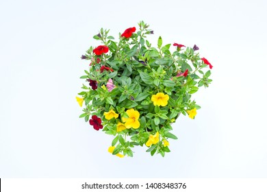 Top view beautiful colorful petunia grandiflora flower in mix colors with red, violet yellow with green leaves growing and blooming on white background. idea plant for balcony in summer season.