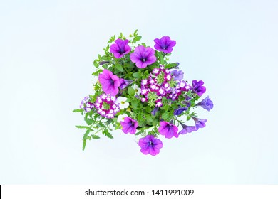 Top view beautiful mix flowers violet of petunia,colorful petunia and   verbena grandiflora flower in green leaves growing and blooming on white background. idea plant for balcony in summer season.