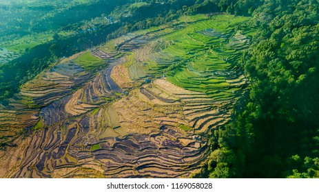 Top view of beautiful terraced farmlands surrounded trees at Tetebatu. Shot in Lombok, Indonesia
