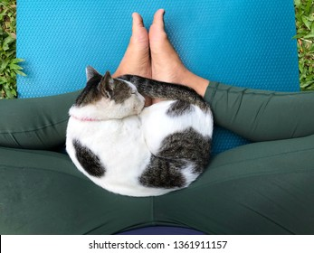 yoga cat images stock photos  vectors  shutterstock