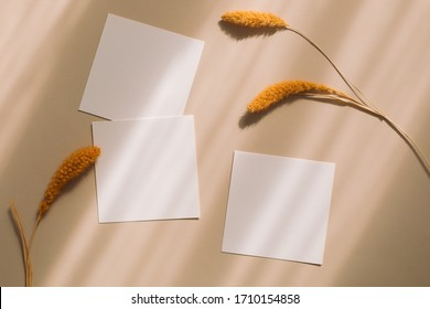 Top view of blank square paper sheets, decorative fluffy spikelets on beige background. Flat lay, mock up.