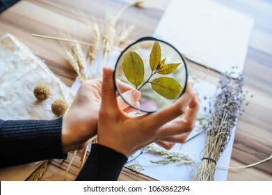 Top view of botanist workplace, she use magnifying glass for analysing dried flower and leaves for cataloging plant at biology lesson