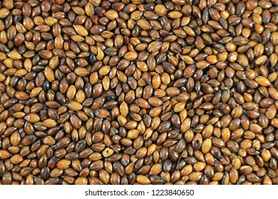 Top View of Brown Color Gradation of Roasted Barley for Making Japanese Roasted Barley Tea