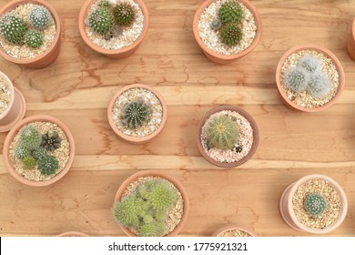 Vue de dessus de l'usine de Cactus pour la décoration de la maison