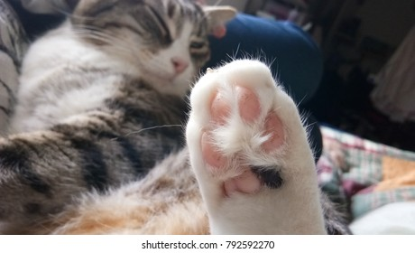 top view Cat's paw