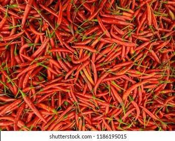 Imágenes, fotos de stock y vectores sobre Thai Dragon Pepper