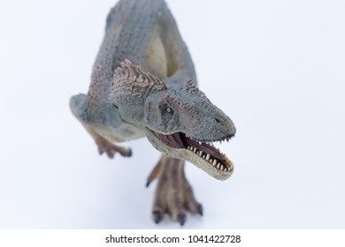 Top view Close up Allosaurus dinosaur roaring and in attack position with white background - mouth open