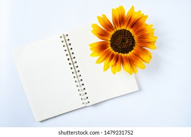 Top view close up beautiful big single sunflower cutting with brown pollen and three colors petals in red orange ,yellow put on notebook .