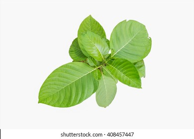 Top view close up on small green tree with big leaves isolated white background