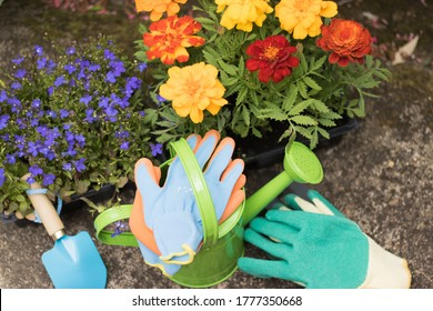 Top View Close-up: Beautiful Flower Plants in Compact Containers from Garden Center and Tools are in Garden. Concept: Gardening.