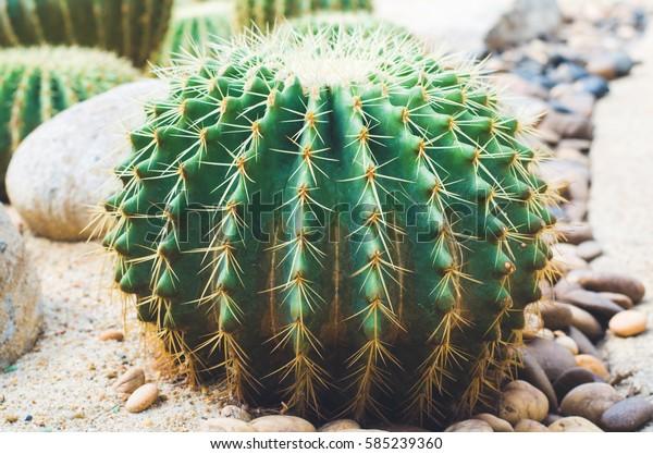 top view closeup cactus.